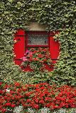 ^ Ivy Covered Window - Richard Cummins