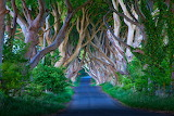 TheDarkHedges_Ireland