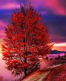 Big Red Tree