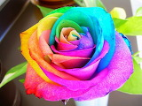 Rainbow Rose @ Pinterest...