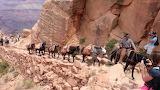 Mule Train - Grand Canyon
