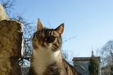 chaussette le chat /Chaussette the cat