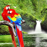 *Macaws on a Branch...
