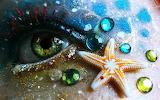 Seashore eye