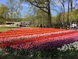 keukenhof_flowers_fields