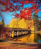 Bridge by Trees
