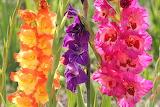 Pretty Flowers...