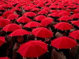 Red-umbrellas-cobb_1513_990x742