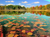 Nature Pond Forest