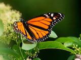 Butterfly - Papallona.jpg