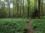 Mile 1606 Little Pond Trail