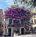 Fragrant House, Sirmione Italy