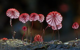 "Plants tumblr dogstardreaming ""Fantastic Fungi"" ""Steve Axford"" A"