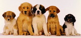 The Alleged Perpetrators- Puppy Line Up