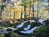 Forest Runoff