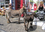 Donkeys in Clovelly-England