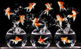 Happy Fish and Bowls