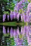 Wisteria Lake