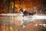 Running dog, water, splash, reflection