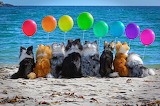 Dogs with colorful balloons