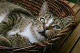 Cats Closeup Wicker basket Snout Glance 555676 1280x853