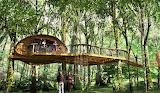 #Patioed Tree House
