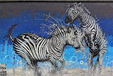 Graffiti-zebras