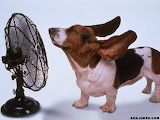 Try to stay cool!