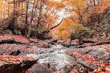 nature forest stream autumn