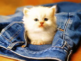 #A Kitten in Your Pocket is Good Luck...