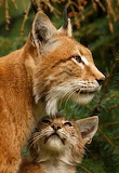 Motherly Love