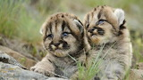 Cute-animal-pics-part19-13