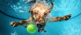 Labrador-5544x2400-dog-underwater-cute-animals-funny-4484