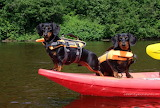 Boat fun for dogs