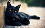 Lounging-cat-black-orange-eyes