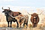 The three amigos Idaho