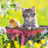 Cute Friends...