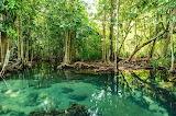 Mangrove-forest,Krabi,Thailand