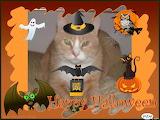 Angel Tamir Halloween