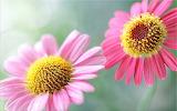 Beautiful-flowers-wallapaper
