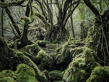 Old forest covered with moss