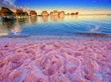 Pink Sandy Beach Bahamas Harbour Island