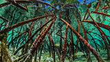Mangroves in Staniel Cay, Exumas, Bahamas