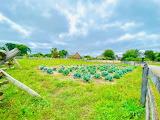 Greenfield Village Firestone Fields by Jen Julet