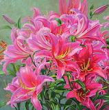 Hot pink asiatic lilies-Fiona Craig