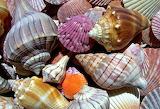 Morskoj-mir-rakushki-priroda-makro-cvetnye