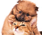 Cuddly Pair