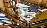 Cat in an old wagon jlk7tdt34dtr-3