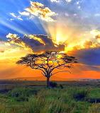 The Splendor of Africa