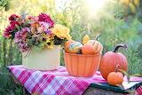 Still-life-pumpkins-flowers-autumn